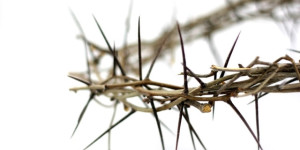 isolated crown of thorns